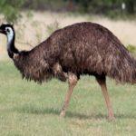 Продукция, получаемая при разведении страусов